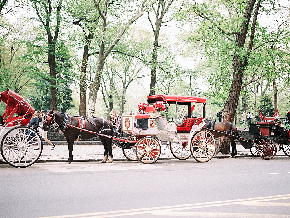 Intimate Central Park wedding horse and carriage